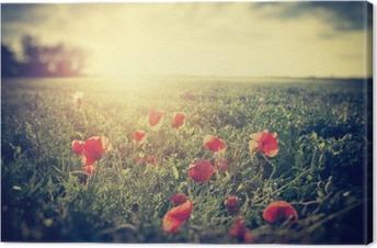 Tuval Baskı Bir haşhaş çayır Vintage fotoğraf. kırsal peyzaj