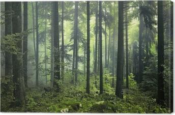 Tuval Baskı Gizemli karanlık orman
