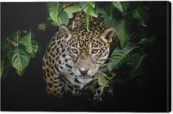 Tuval Baskı Jaguar portre