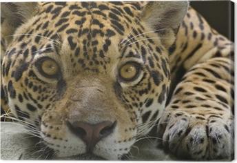Tuval Baskı Kameraya bakarak büyük kedi jaguar
