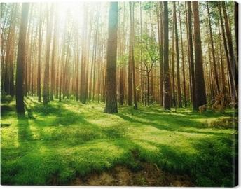 Tuval Baskı Misty Eski Orman
