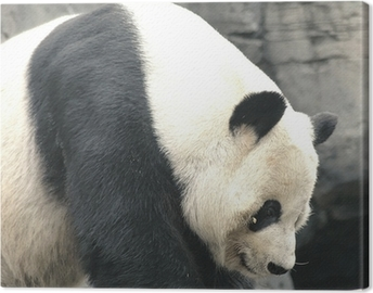 Tuval Baskı Panda