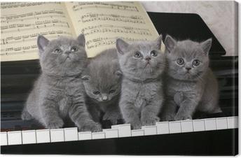 Tuval Baskı Piyanoda dört İngiliz kedi yavrusu