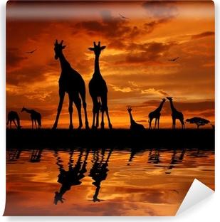 Tvättbar Fototapet Flock giraffer i solnedgången