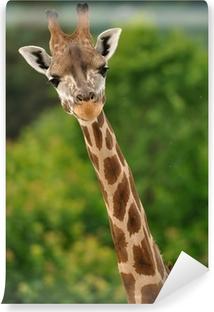 Tvättbar Fototapet Giraff huvud med hals