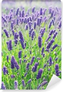 Tvättbar Fototapet Lavendel blommor blommar i ett fält