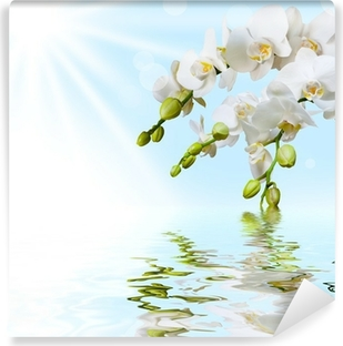 Tvättbar Fototapet Vackert vit orkidé