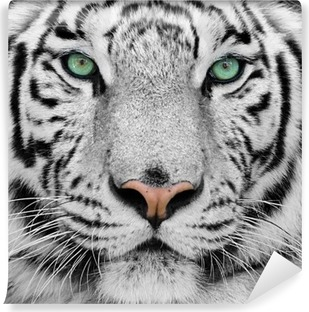 Tvättbar Fototapet Vit tiger