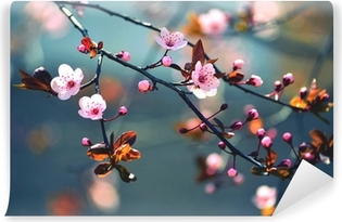 Kevät kukka japanilainen puu sakura Vinyyli Valokuvatapetti