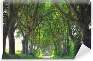 Tummat pensasaidat Vinyyli valokuvatapetti