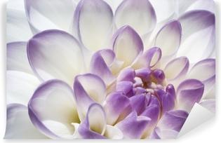 Valkoinen ja violetti dahlia läheltä Vinyyli valokuvatapetti