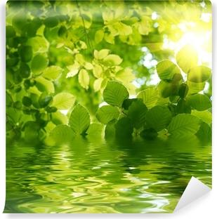 Vihreät lehdet auringon säteellä. Vinyyli valokuvatapetti