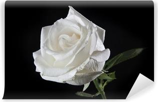 Hvid rose Vaskbare fototapet