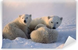 Isbjørne, kvindelige cub er pleje. Canadiske arktiske Vaskbare fototapet
