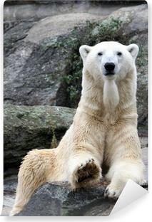 Vaskbar fototapet Isbjørnportrett