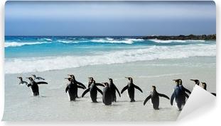 Vaskbar fototapet Kong pingviner