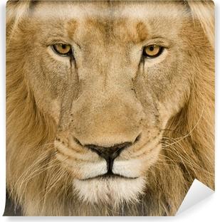 Vaskbar fototapet Nærbilde på en løvehodet (4 og et halvt år) - Panthera leo