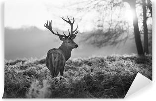 Vaskbar fototapet Røde hjort i Richmond park