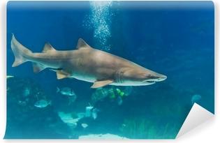 Vaskbar fototapet Sand tiger hai (Carcharias taurus) undervanns nærbilde portra