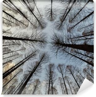 Smukke skov og blå himmel Vaskbare Fototapet