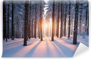 Vaskbar fototapet Solnedgang i skogen i vinterperioden