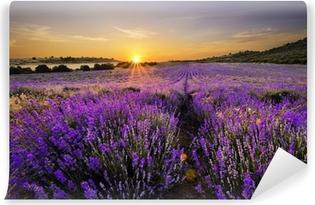 Solnedgang over lavendel felt Vaskbare Fototapet