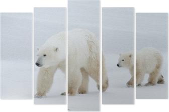 Vijfluik Ijsbeer moeder en cub lopen op het ijs