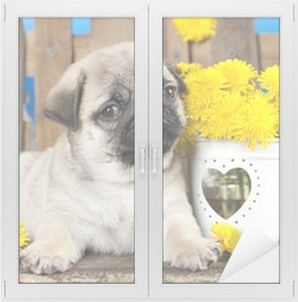 Vindu- og glassklistremerke Pug valp og våren løvetann blomster