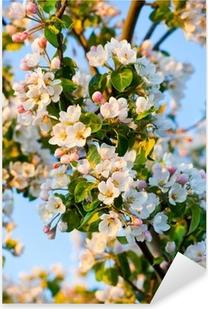 Vinilo Pixerstick Apple-árbol de la flor