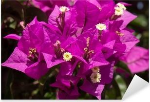 Vinilo Pixerstick Buganvillas flores