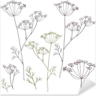 Vinilo Pixerstick Eneldo o las flores y las hojas de hinojo.