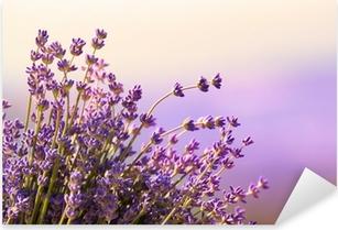 Vinilo Pixerstick Flores de lavanda florecen el horario de verano