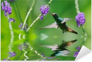 Vinilo Pixerstick Hermosa colibrí en la reflexión
