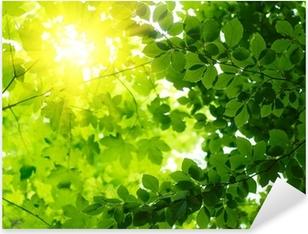 Vinilo Pixerstick Hojas verdes con los rayos solares.