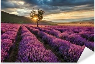 Vinilo Pixerstick Impresionante paisaje con campo de lavanda en la salida del sol