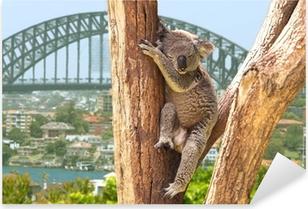 Vinilo Pixerstick Koala linda en Sydney, Australia
