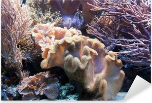 Vinilo Pixerstick La vida submarina, peces, arrecifes de coral en el océano