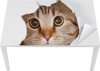 Vinilo para Mesa y Escritorio Gato que mira hacia arriba en el lado del papel rasgado agujero aislado