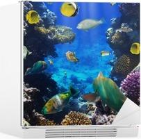 Vinilo para Nevera Coral colonia coral y peces
