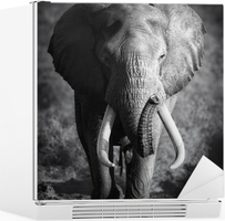 Vinilo para Nevera Elefante Bull (procesamiento Artístico)