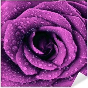 Vinilo Pixerstick Púrpura oscura rosa de fondo
