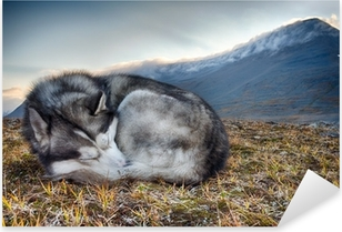 Vinilo Pixerstick Siberian Husky durmiendo en las montañas