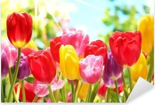 Vinilo Pixerstick Tulipanes frescos en el cálido sol