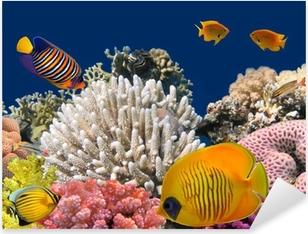 Vinilo Pixerstick Vida submarina de un arrecife de coral duro, mar rojo, Egipto