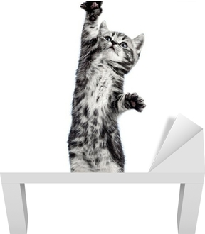 Vinil para Mesa Lack playful kitten cat isolated on white
