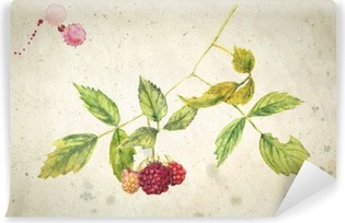 A branch of raspberry - realistic watercolor painting. On vintage beige background. Vinyl Wall Mural