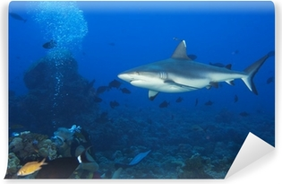 Small shark in the ocean with amazing light ray Wall Mural Pixers