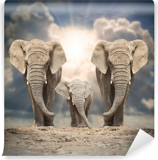 African elephant family on the road. Vinyl Wall Mural