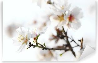 almond blossom Vinyl Wall Mural