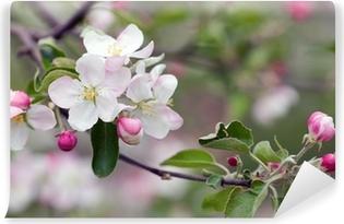 apple blossom Vinyl Wall Mural